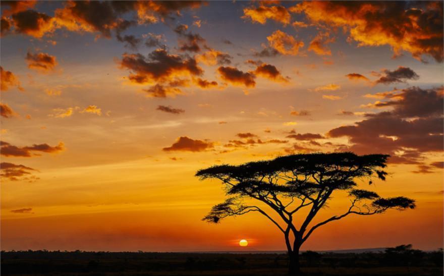 drzewo egzotyczne