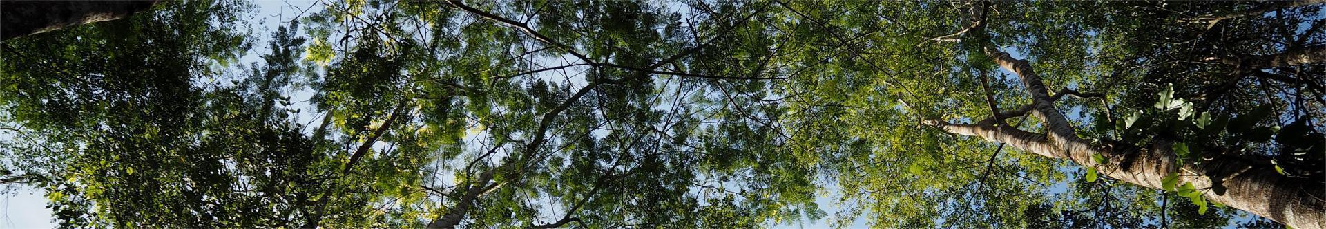Konary drzew na tle błękitnego nieba