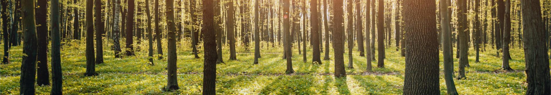 Zbliżenie na drzewa w lesie